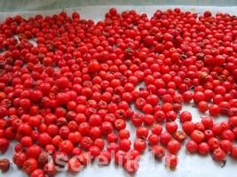 Примочки из ягод рябины