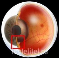 Высокое давление способствует появлению глаукомы