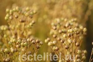 Применяйте семена льна с осторожностью