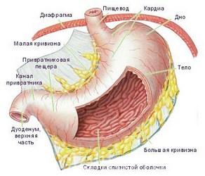 Причины и симптомы кардии