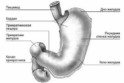 Спазм привратника желудка