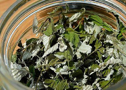 Сухие листья ежевики