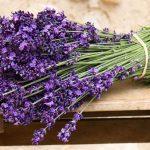 Пять полезных растений в ваш сад или на подоконник